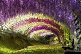 Avatar_profile_beautiful-hanging-garden-flowers-park-bench-photo