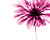 Avatar_profile_gerber_daisy_speed_painting_by_wonderlies-d6i26cs