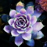 Avatar_profile_lotus