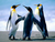 Avatar_public_top_penguins